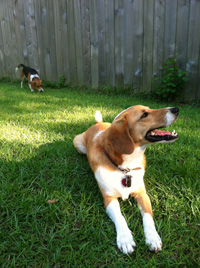 Does Your Dog Get Enough Exercise in theBackyard?