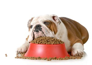 My Dog Isn't Eating: What's Wrong?