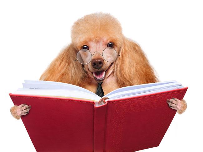 DogReadingBook650px